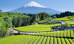 Teeanbaugebiete japanischer Tee