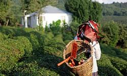 Teeanbaugebiete in Mittelasien