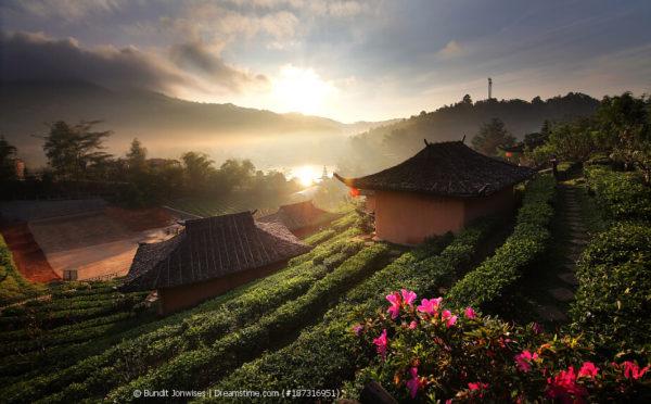 China – Jahrtausende alte Teetradition