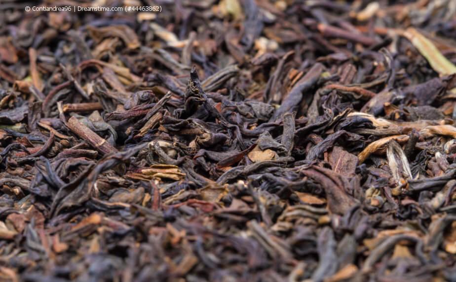 Loser Darjeeling Tee