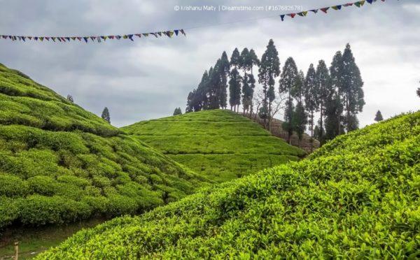 Darjeeling-Flugtee: nicht abheben!