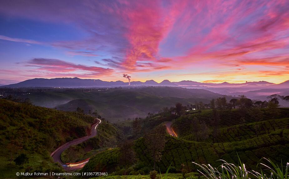 Indonesischer Tee - Teeplantage in Indonesien