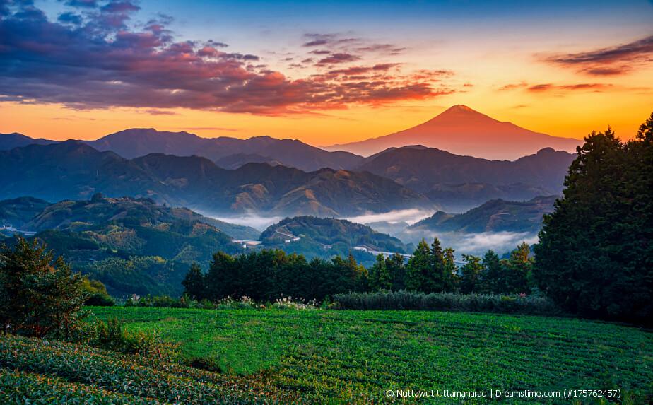 Teeanbau in Japan