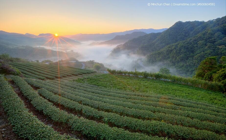 Teeanbau in Taiwan