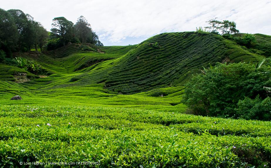 Teeanbaugebiete rund um die Welt