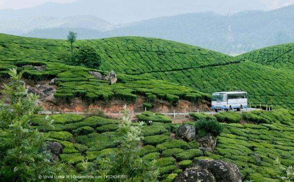 Teereisen durch Indien – der genussvolle Urlaub