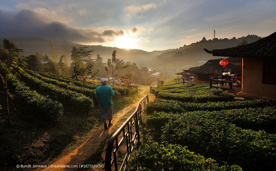 Teereisen durch China
